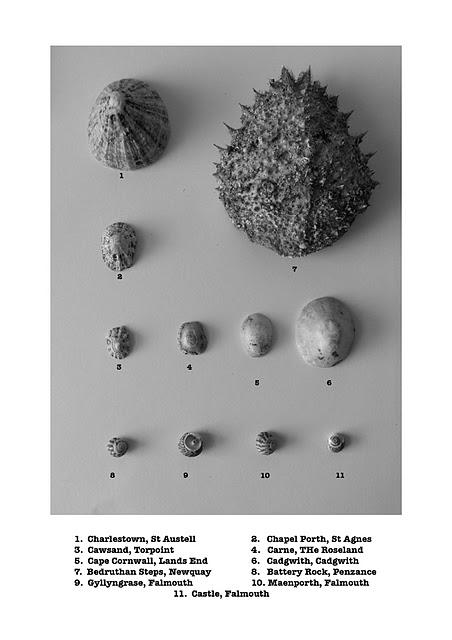 shells classified
